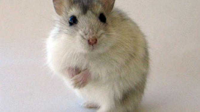 Los ratones más famosos