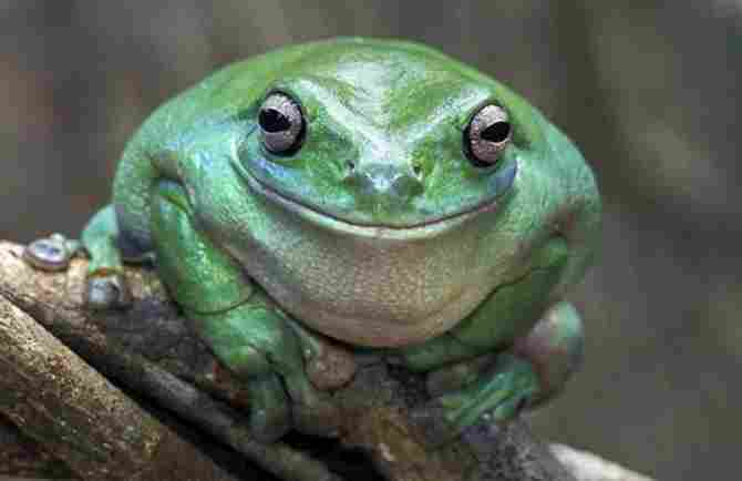 Good-natured toad