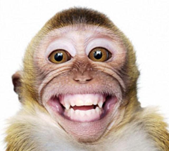 Macaco encantado em nos ver