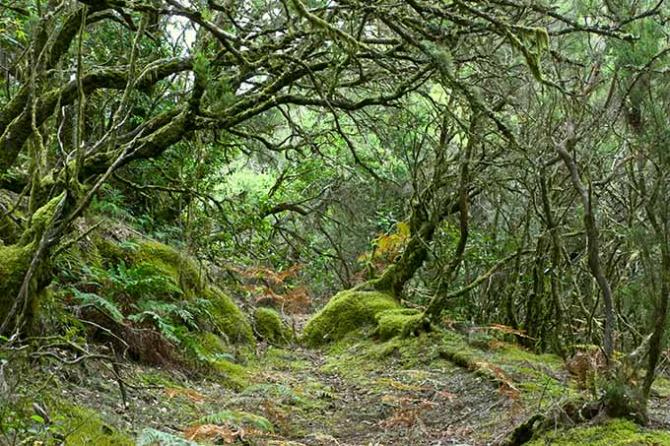 Национальный парк Гарахонай (Ла Гомера)