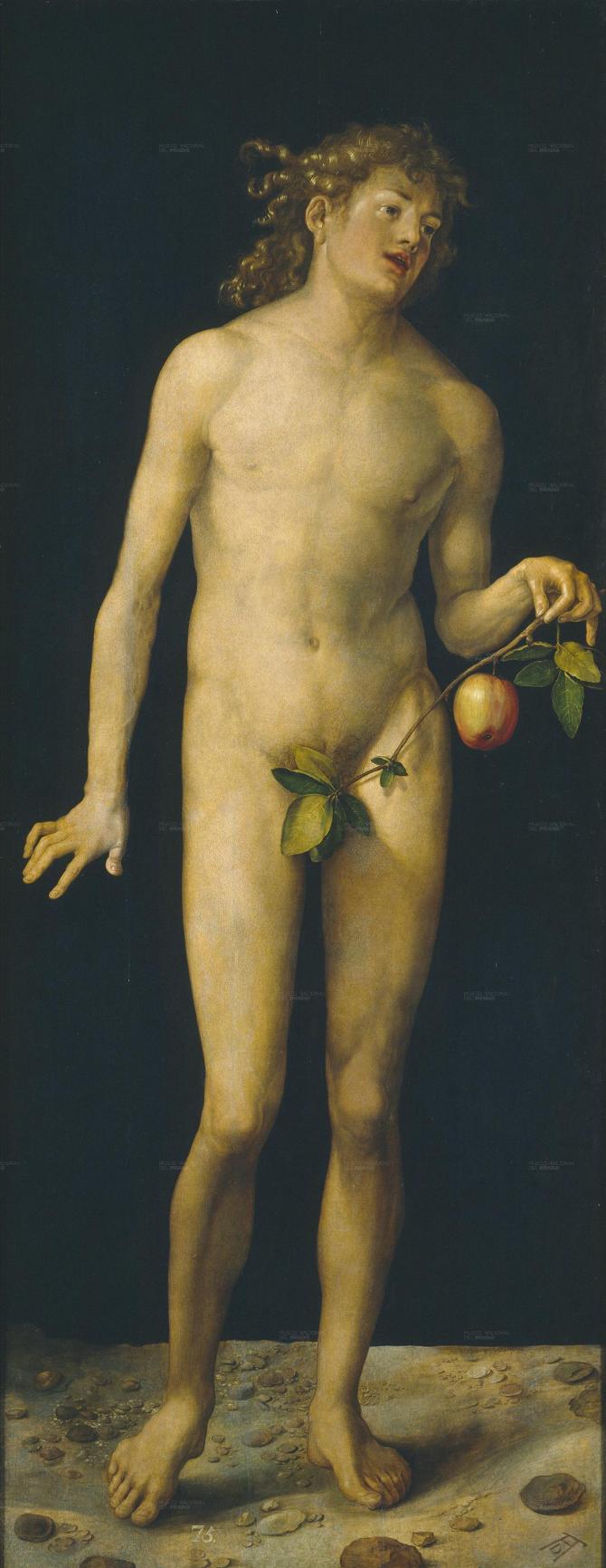 Адам (Дюрер)