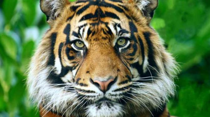 Os animais mais fortes do mundo
