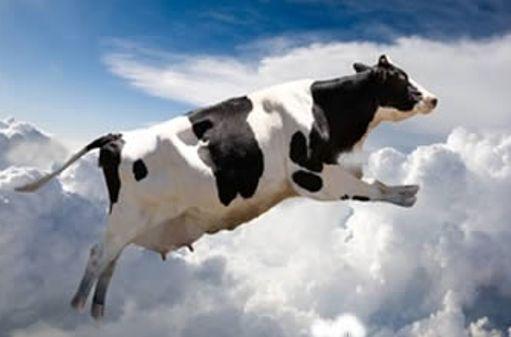 Корова, которая упала с неба в Японии