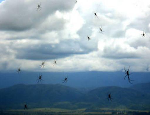 Дождь пауков в Аргентине