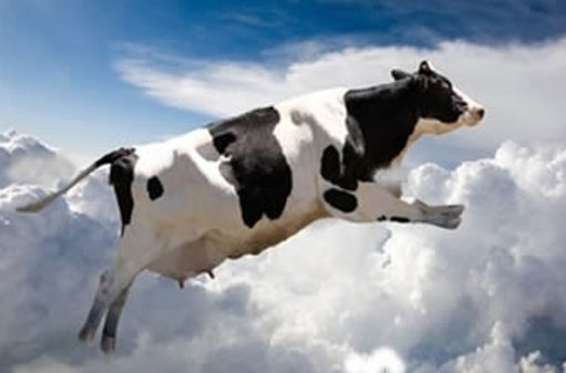 A COW THAT FELL FROM HEAVEN IN JAPAN