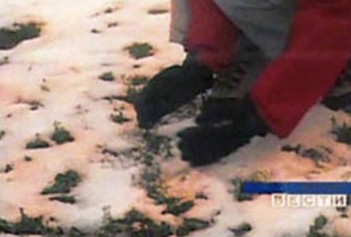 FALL COLOR SNOW IN SIBERIA