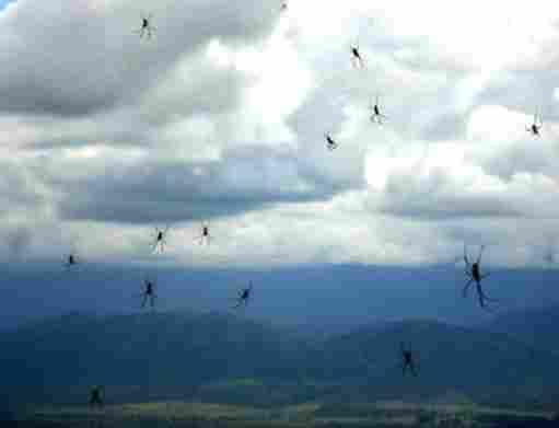 RAIN OF SPIDERS IN ARGENTINA
