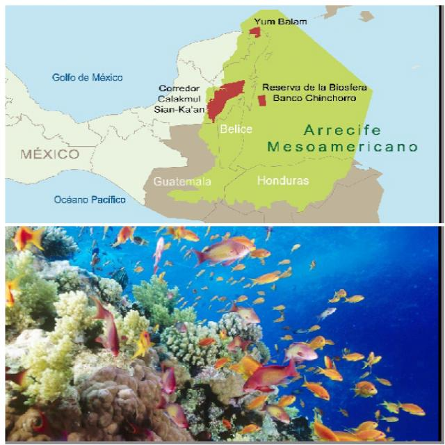 Мезоамериканский риф (Мексика-Гватемала-Белиз-Гондурас)