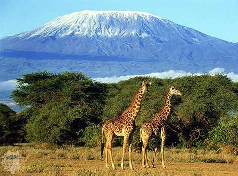 Вулкан Килиманджаро (ТАНЗАНИЯ)
