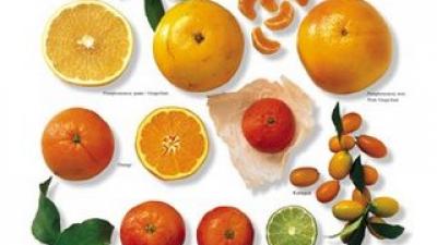 Лучшие цитрусовые