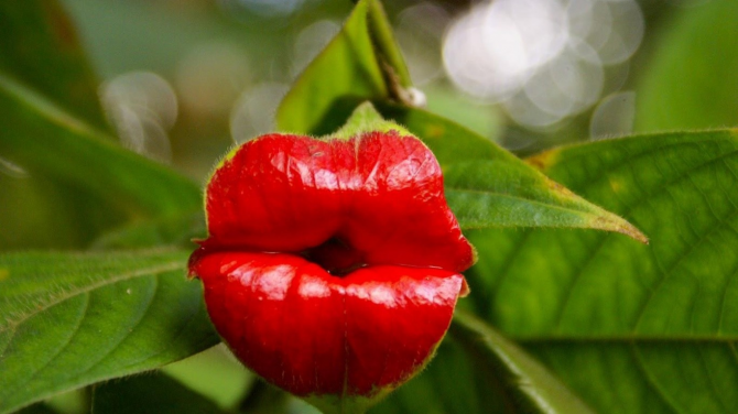 A very kissing flower