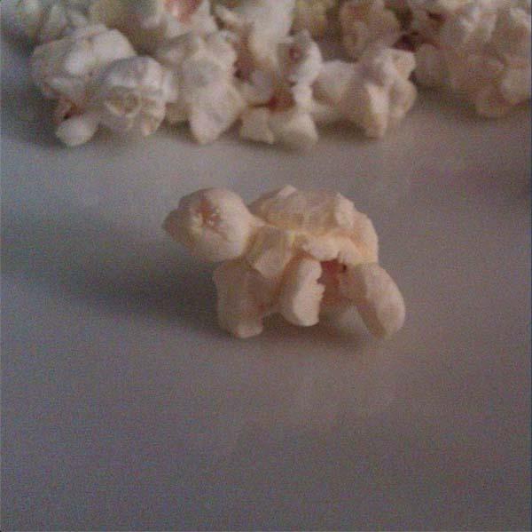 Penyu Popcorn