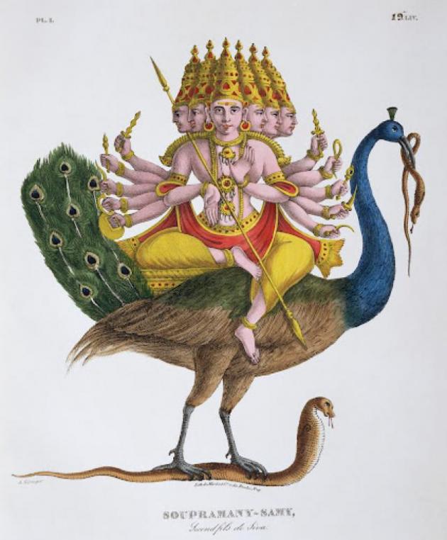 No hinduísmo, o pavão é um monte para Kārttikeya ou Skanda, o deus da guerra
