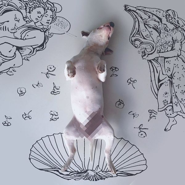 A doggy art work