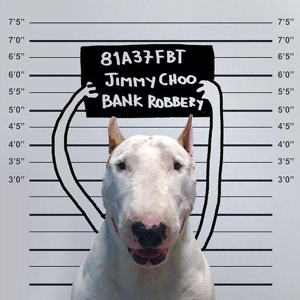 Acusat de robatori