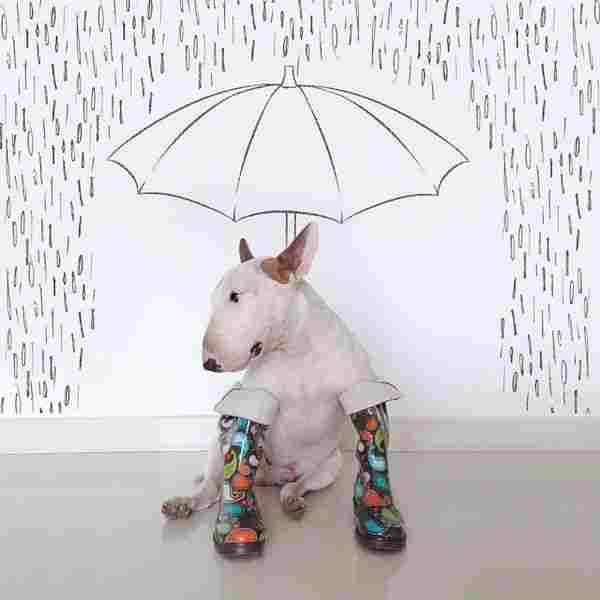 Jimmy sota la pluja