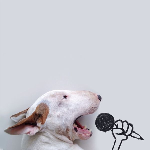 Jimmy the singer
