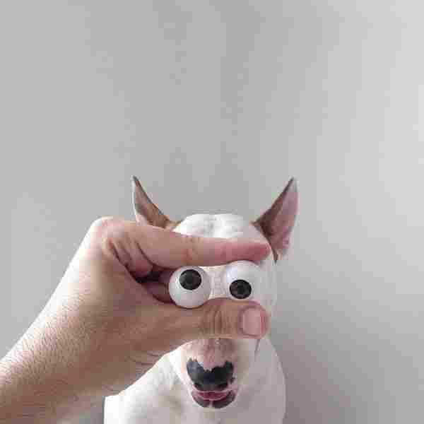 ulls bojos