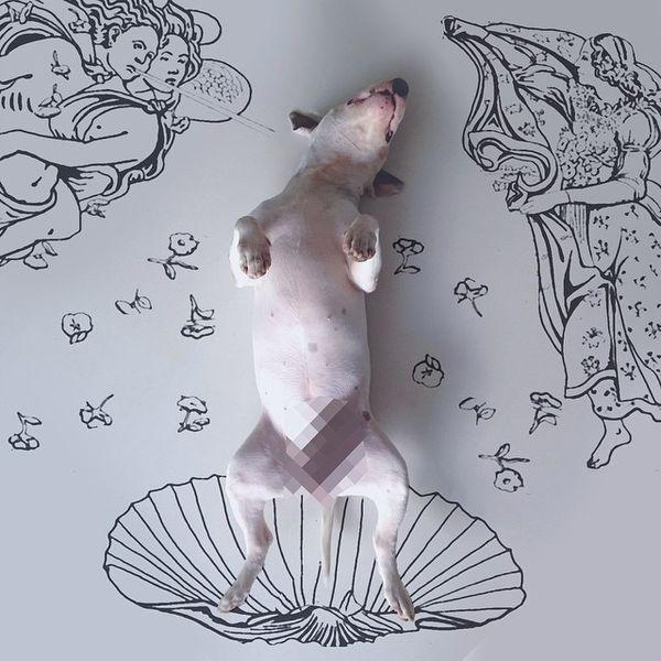 Una obra d'art canina