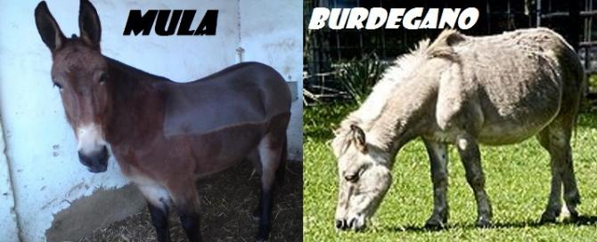 MULA - BURDEGAN