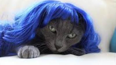 Kucing dengan rambut palsu