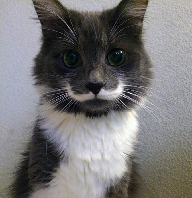 De hipster kat