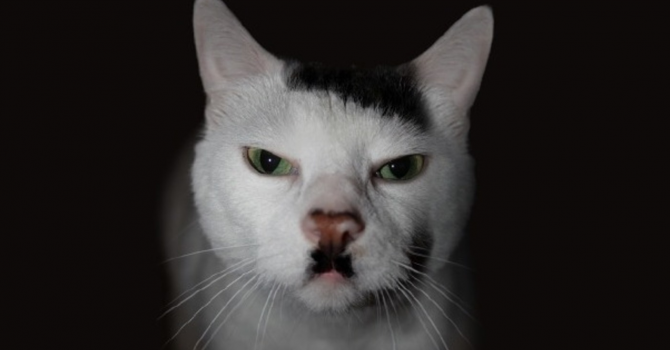 Hitler de kat