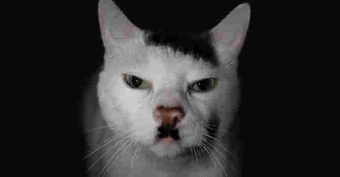 Hitler el gato