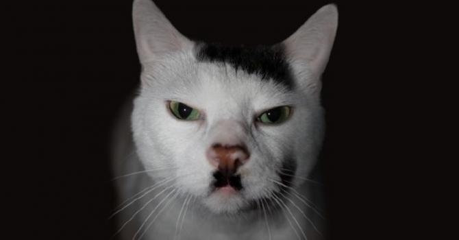 Hitler the cat