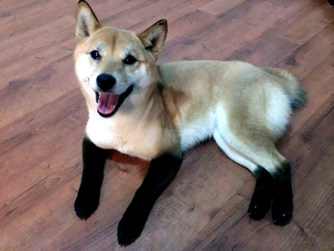The dog with boots