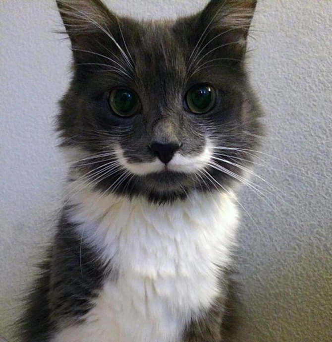 The hipster cat