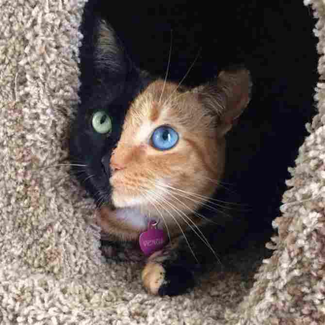 Un gato 2 en 1