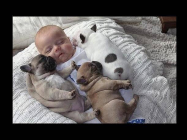 Cuatro bellos durmientes