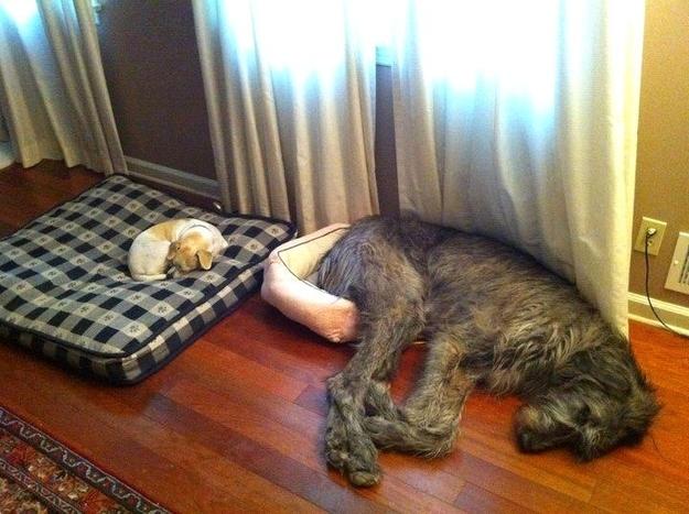 Dos grandes amigos
