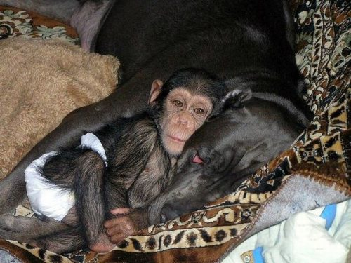 Hondslaap met een aap