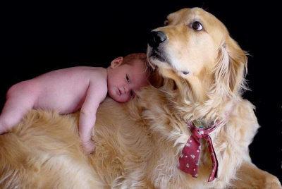 Lojal hund