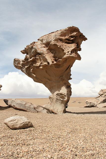 Каменное дерево (Боливия)