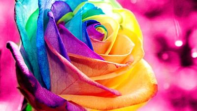 गुलाबमा रङहरूको अर्थ