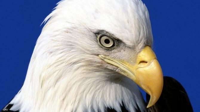 Лучший орел в мире
