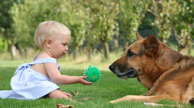 De beste honden voor gezinsleven