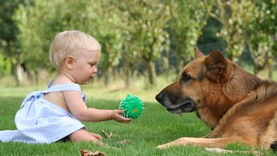 Die besten Hunde zum Familienleben
