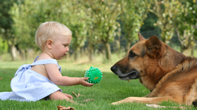 The best dogs for family living