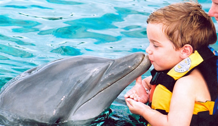 Anak lelaki berenang dengan lumba-lumba
