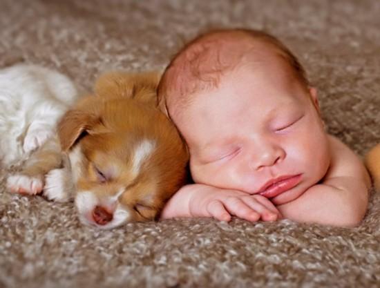 Baby och hund