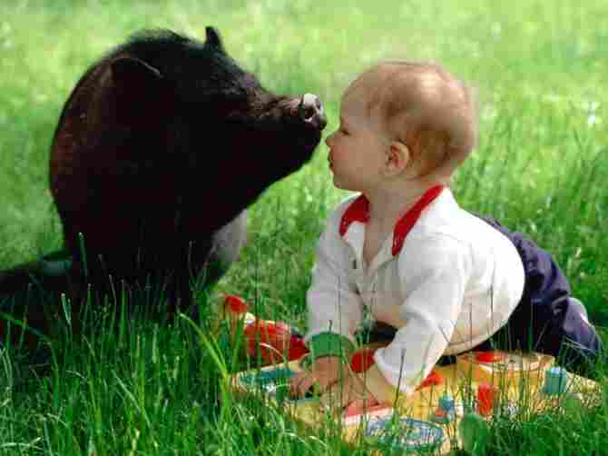 Baby with wild boar