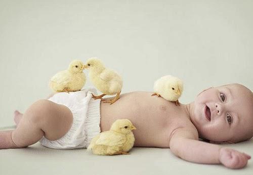 Bebé y pollitos