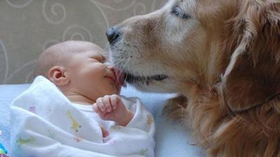 De bästa bilderna av spädbarn med djur