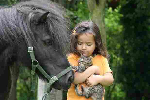 Girl, horse and cat