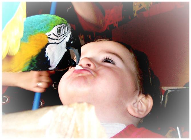 Kanak-kanak dengan burung nuri