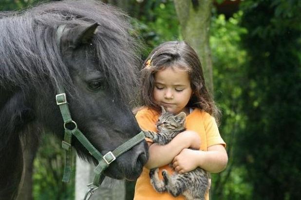 Niña, caballo y gato
